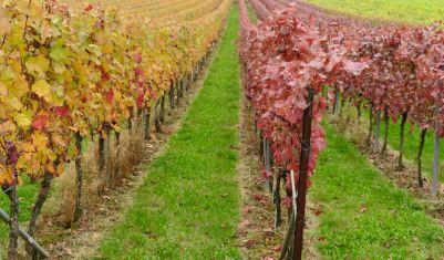 Wein_Pfalz_8