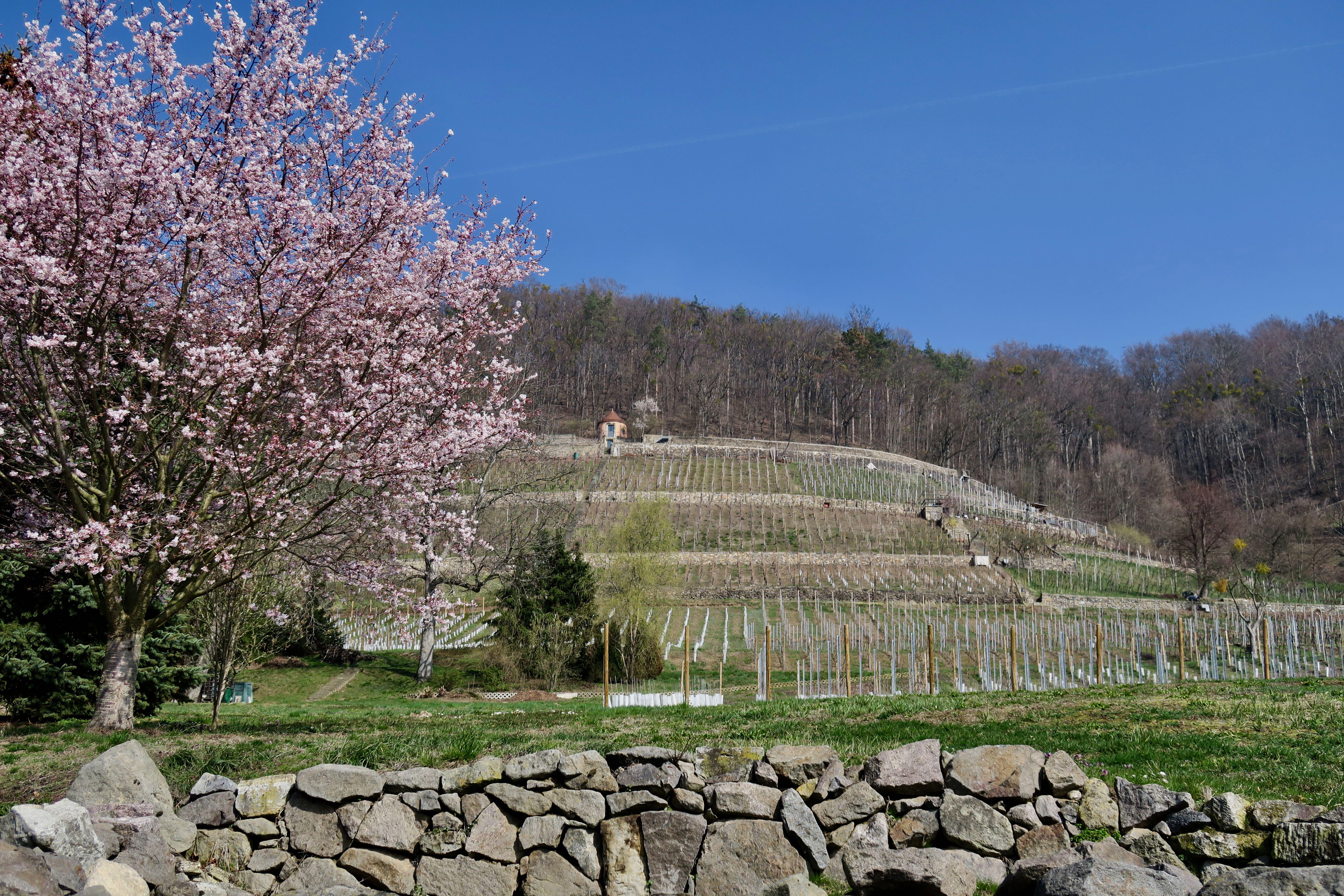 Sächsischer Weinwanderweg