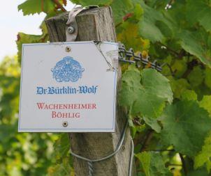Pfalz_Wachenheim_7