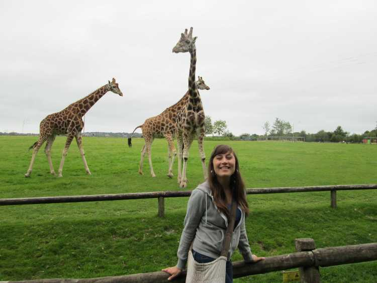 Woman in a Zoo, with three giraffes behind her.
