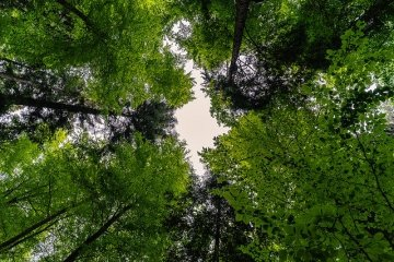 Green canopies in a dense forest with a bit of sky, seen from the ground.