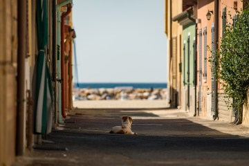 An empty street, houses with doors and windows closed, a dog lying in the shadow looking at the horizon, the sea on the background.