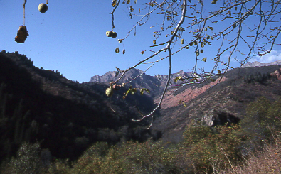 Walnut-fruit forest at Sary-Chelek