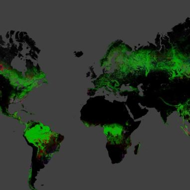 Global Forest change Earth view