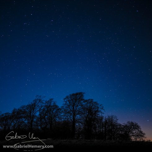 Beech trees and nightsky