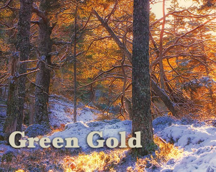 Green Gold by Gabriel Hemery