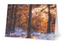 Caledonian pinewood card