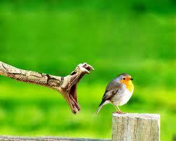 serpente e uccellino