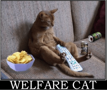 welfare-cat