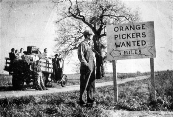 orange pickers