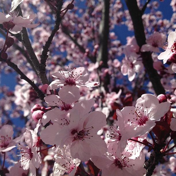 Springtime! :)