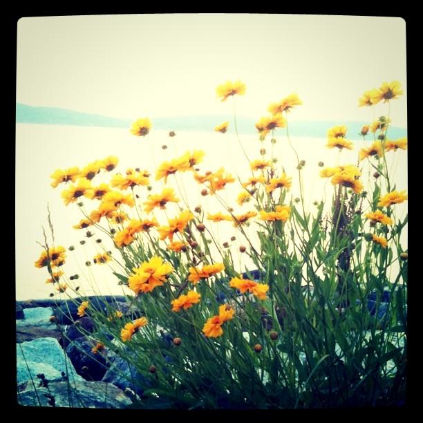 Sunset flowers