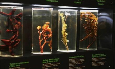 Museo de la medicina mexicana: un libro abierto y vivo
