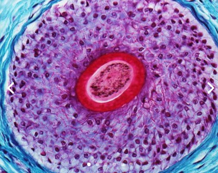 Estudia Biología Celular e Histología Médica en línea