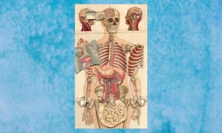 La ilustración contemporánea y su vínculo con la Medicina
