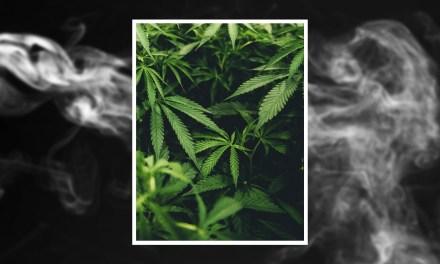 ¿Qué efectos tiene la cannabis en la salud?