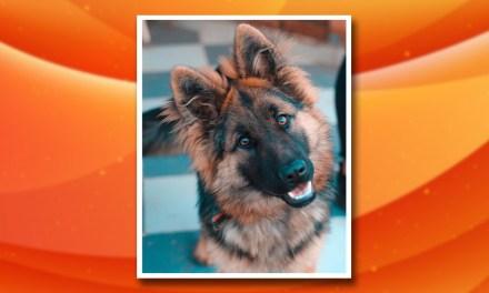 ¿Los perros pueden detectar la COVID-19?