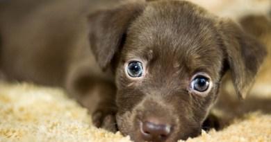 1.500 familias madrileñas se ofrecen para cuidar mascotas durante el puente de mayo