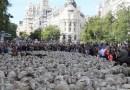 Las ovejas vuelven al centro de Madrid para celebrar el 600º aniversario de la trashumancia