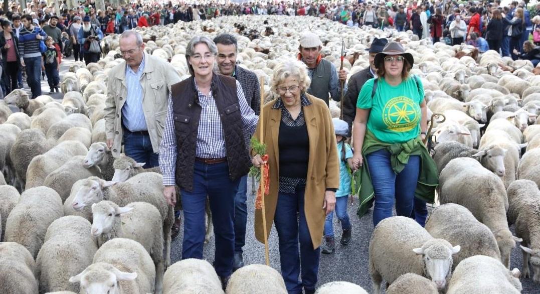 Manuela Carmena anuncia que la Casa de Campo contará con un rebaño de 600 ovejas