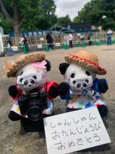 シャンシャン4歳の誕生日に上野をお散歩してきたよ!