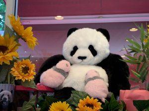 双子パンダが生まれてから、初めて上野動物園に行ってきました。