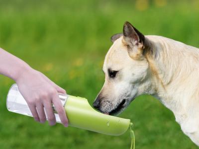 portable Hundetränke Vorschau