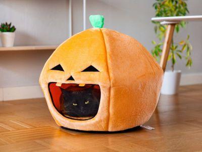 halloween katzenbett