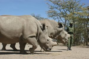 Ol Pejeta Conservacy Plans Virtual Tours Amidst Travel Restrictions