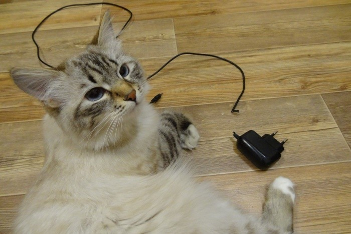 it is better to hide the charger away from children and animals