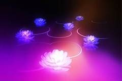 lotus - Download Android 3.0 Honeycomb HD Wallpapers
