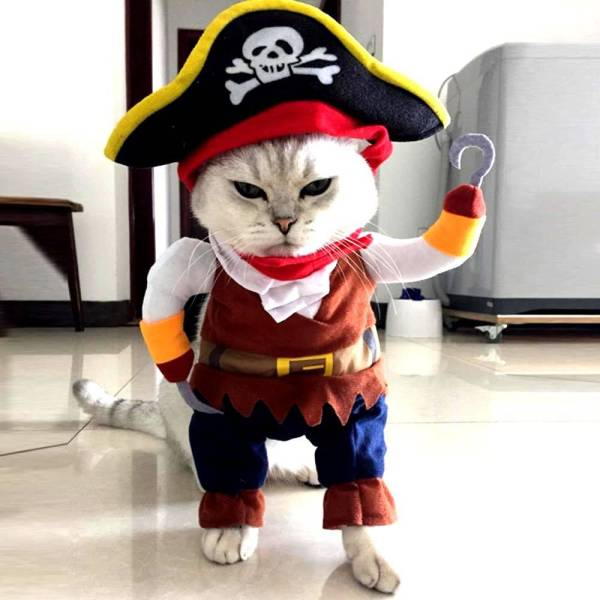 "Pirate Pet Costume Dogs & Cats What's New Cool Gadgets size: L:Height:11"",Neck Girth:14""