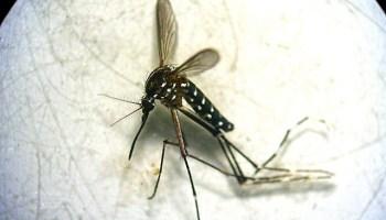 app mosquito tigre