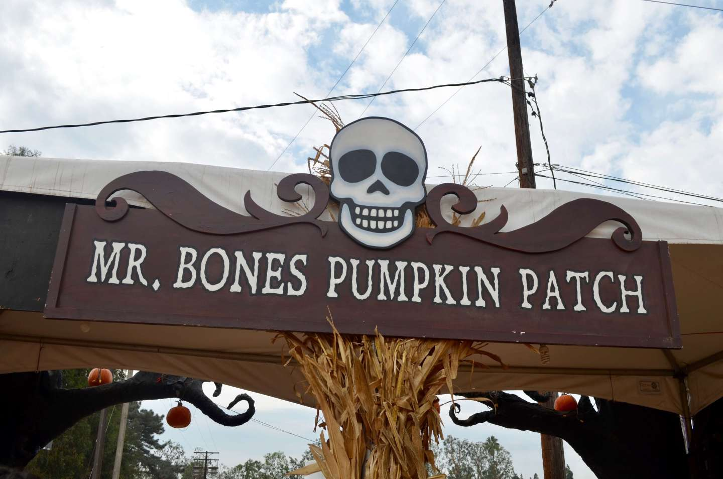 Mr. Bones Pumpkin Patch