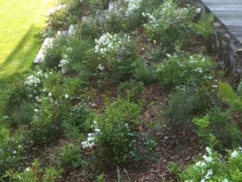 gartengestaltung böschung mauern und böschungen – gärtnerei ziegler