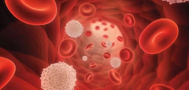 Blood Platelet structure and functions in hemostasis