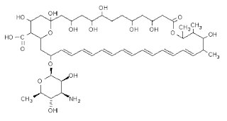 Amphotericin B (AmB)   Serious systemic fungal infections