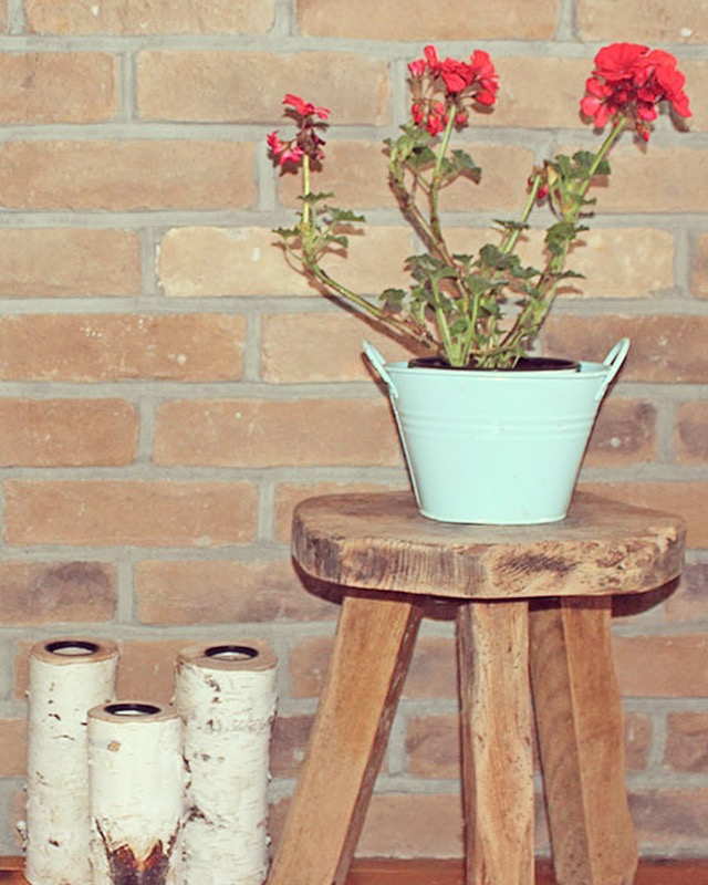 Geranium indoor plant