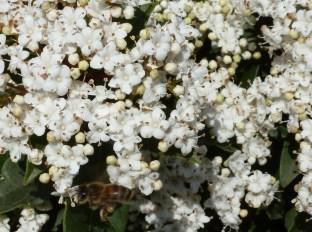 Hier kann man Nektar finden die Bienen wissen es schon
