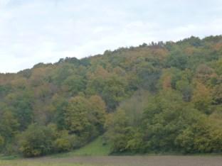 Wald bei Bad Bodendorf