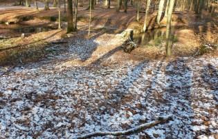Der Wald in der Saaler Erhohlungswald