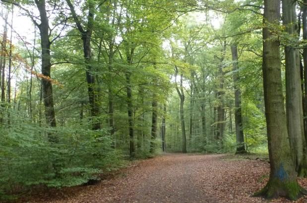 Herbst Wanderweg