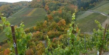 Der Herbst in seiner schönsten Pracht