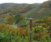 Die Weinberge bei Dernau