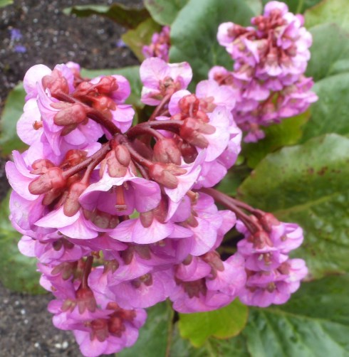 zarter Blütenbusch
