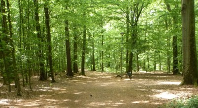 Der Waldweg zum See