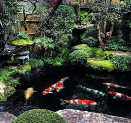 Stunning Backyard Aquarium Ideas 22