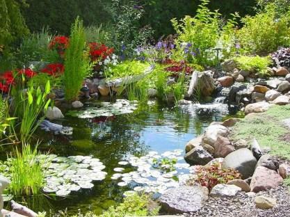 Stunning Backyard Aquarium Ideas 45