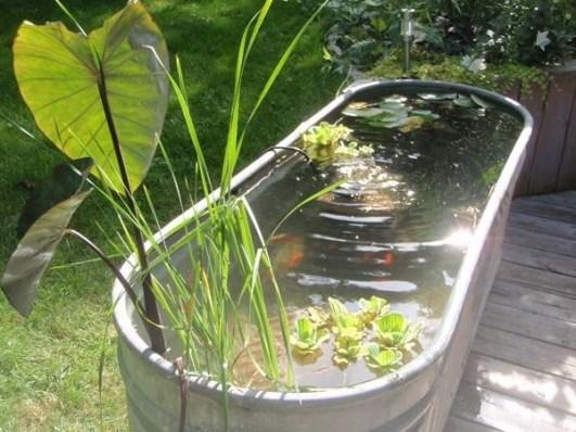 Stunning Backyard Aquarium Ideas 48
