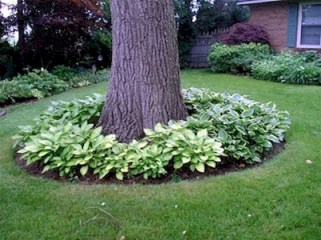 Pretty Front Yard Landscaping Ideas 45